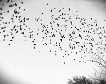 Starlings take flight
