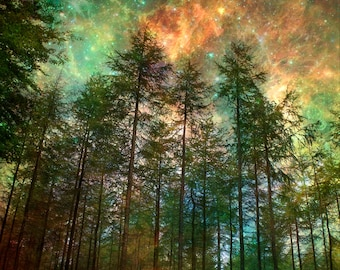 Nature Photography,Trees, Forest, Woodland, Starry Night Sky, Fine Art print, Home Decor.