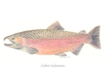 Coho Salmon - Print