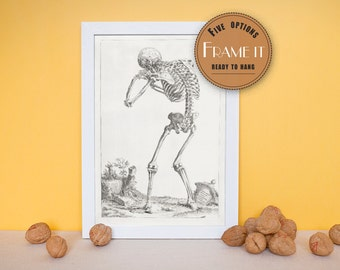 "Vintage illustration of a skeletal figure - framed fine art print, art of anatomy, home decor 8""x10"" ; 11""x14"", FREE SHIPPING - 154"
