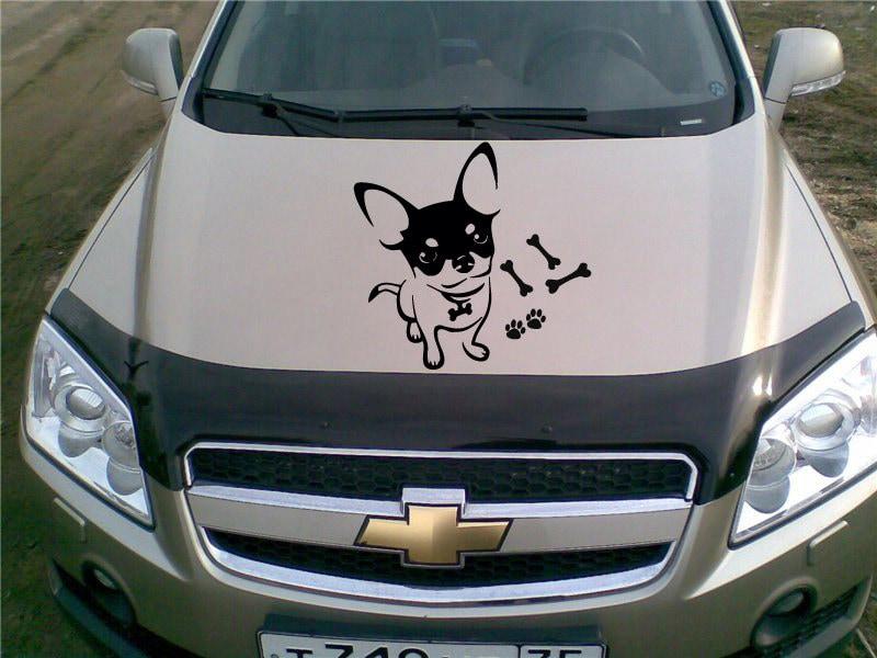 chihuahua voiture capot stickers animaux chien t te pet shop. Black Bedroom Furniture Sets. Home Design Ideas