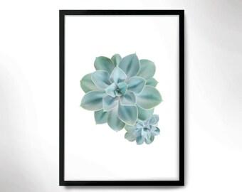 Beautiful Botanical Print, Cactus poster, Cactus photo, Botanical poster.