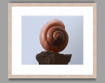 SEASHELL #5 - Framed Art Photography, Home Decor, Wall Art, Nature, beach, seashells, ocean