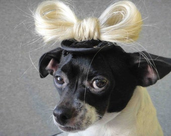 Lady Gaga hat for dogs or cats
