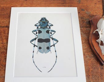 Vintage Print Of Alpine Longhorn Beetle by Prochazka, , Insect Art, Vintage Bookplate
