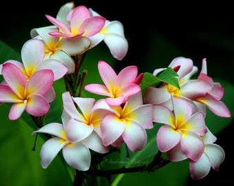 Pink and White Flowers, Fine Art Photography, Nature Photography, Color Photography