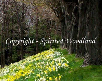 Edge of the Enchanted Forest Fine Art Photo 8 X 10 Print - FREE SHIPPING