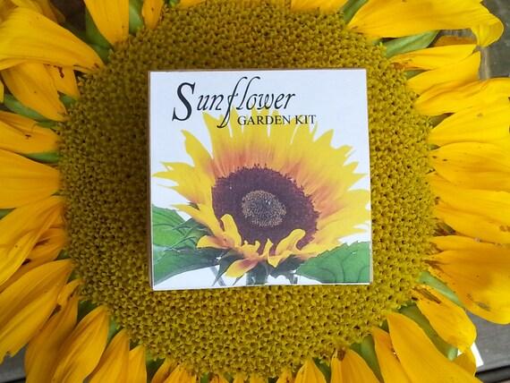 Sunflower seeds garden kit, sunflower seed wedding favor, sunflower ...