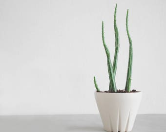 small plant pot, modern planter, herb planter, succulent planter, decorative ceramic planter, house plant, ceramic cactus pot, green thumbs