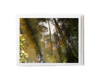 Out Among the Cypress Trees Notecard