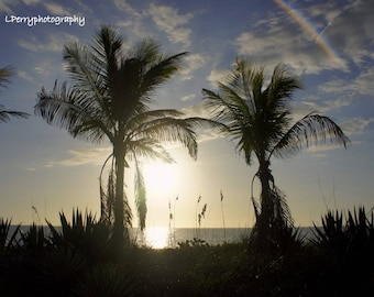 Tropical Palms Photographic Print