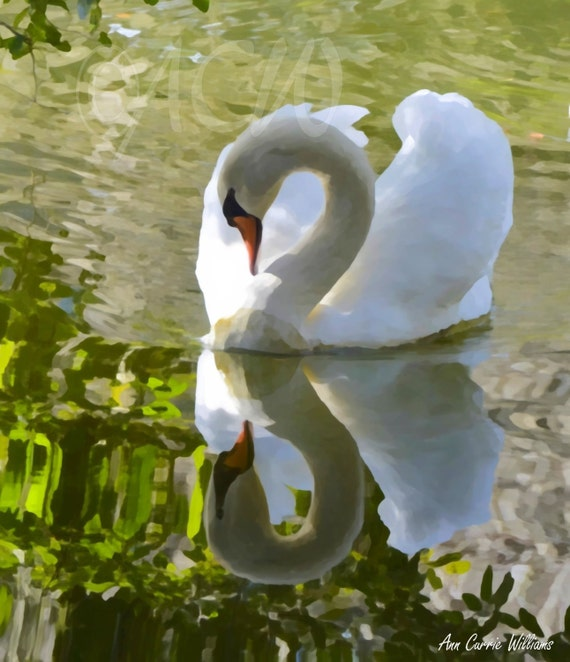 Swan's Reflection (canvas)