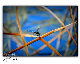 Dragonfly Black Framed Wall Art Photography