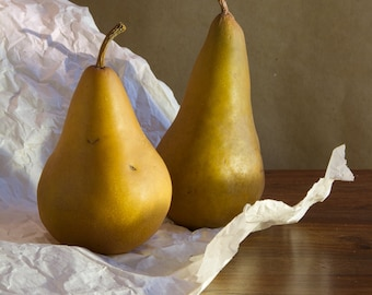 Still Life Pears FREE SHIPPING Vintage Antique Rustic Home Decor Wall Art Fine Photograph Kitchen Food Fruit Classic Brown Green Shabby Chic