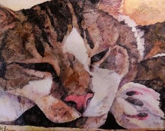 Kittywampus #16