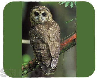 Mouse Pad; Northern Spotted Owl