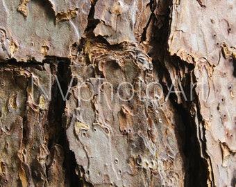 plated bark