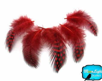 Guinea Feathers, 1 Pack - RED Guinea hen plumage Feathers 0.10 oz. : 229