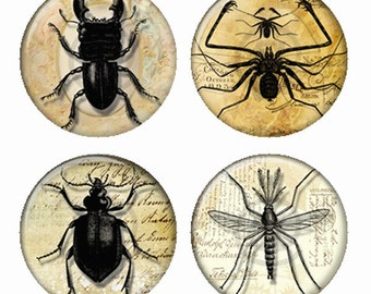 Insect Collection Beetles Spider Magnets or Pinback Buttons or Flatback Medallions Set of 4