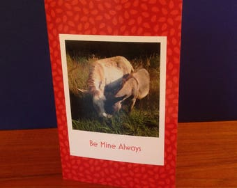 Donkey Love Greeting Card