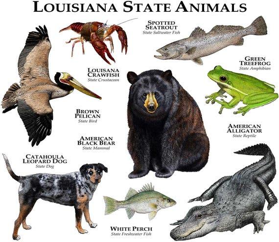 Louisiana State Animals Poster Print