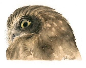 Boobook Owl Original Watercolour Avian Faces Series 6/12