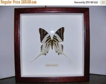 ON SALE Vintage Framed Butterfly