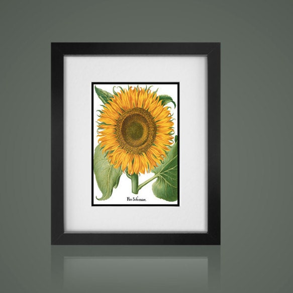 SUNFLOWER BOTANICAL PRINT -Free Shipping - Matted And Framed ...