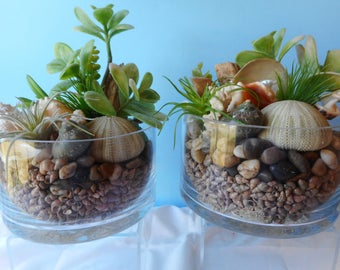 Artificial Succulent SeaShell Cylinders-Floral Arrangement-Beach Arrangement-Faux Succulents