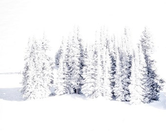 Snow photo, Colorado art, pine tree winter photo, white pine trees print, white snow frozen photo, winter wall art, rustic log cabin decor