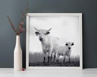 Black & White Photography, Cow Art, Animal Photography, Fine Art Photograph, Animal Wall Art, Cow Photography
