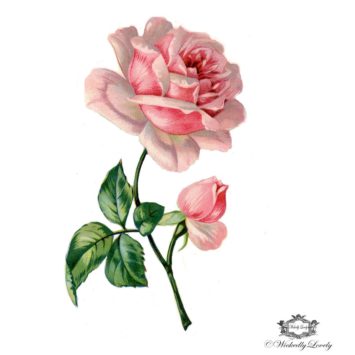 Victorian Pink Rose Book Illustration Wintage Floral Tattoo