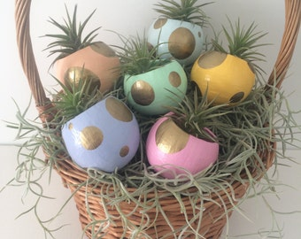 Mini Air Plant Planter with Air Plant. Easter Table Setting. Easter Basket. Spring Decor. Hostess Gift. Pink, Purple, Peach, Gold, Mint