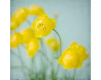 Buttercups Floral Art Print, Wildflower Wall Decor, Still Life  Photograph, Yellow, Botanical Art Print