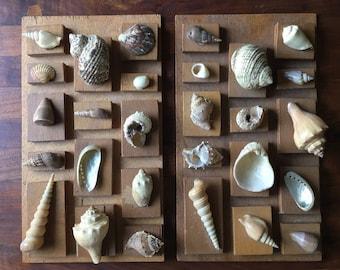 Vintage Homemade Sea Shell Collection Display