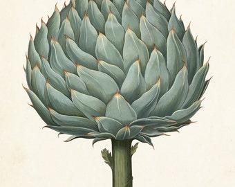 Antique Artichoke No. 1 Botanical Print, Giclee, Art Print, Antique Botanical, Artichoke Print, Vegetable Print, Antique Vegetable, Wall Art