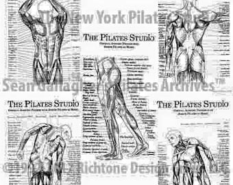 Pilates Anatomy Poster Set