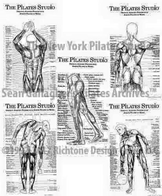 Pilates-Anatomie-Poster-Set