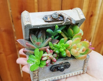 Ivory white wooden drawer treasure box with succulents
