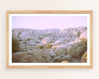 Joshua Tree Photo