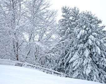A Winter Walk - landscape photograph - nature snow art white trees forest woodland