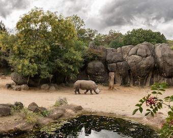 Rhino Baltimore Zoo Portrait Photograph Digital Download Wall Art