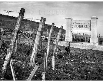 Black and white photo paper print: road of wine (Burgundy)
