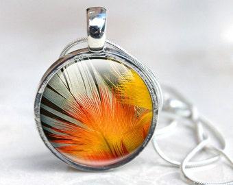 Orange Pendant Necklace, Vibrant Orange and Yellow Feather Pendant. Feather Macro Photo  Bird feather photo Glass Dome Necklace