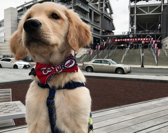 Washington Nationals Dog + Cat Bow Tie