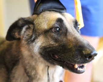 Dog Graduation Cap/Graduation Hat