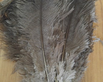 50s Ostrich feather bundle in mink grey, approx 60 feathers