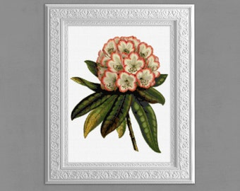Cross Stitch Pattern, Rhododendron Cross Stitch Pattern, Rhododendron Cross Stitch Chart, Embroidery Pattern,  Floral Xstitch, 14 ct, cs009