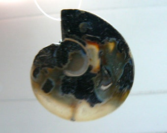 Druzy Ammonite fossil bead 29x25mm- Natural focal beads- Jewelry beads supply