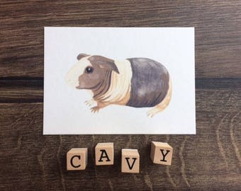 Guinea-Pig postcard - the Baldwin